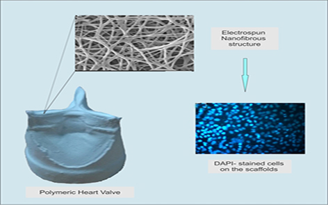 Fabrication and characterization of nanofibrous tricuspid valve scaffold based on polyurethane for heart valve tissue engineering